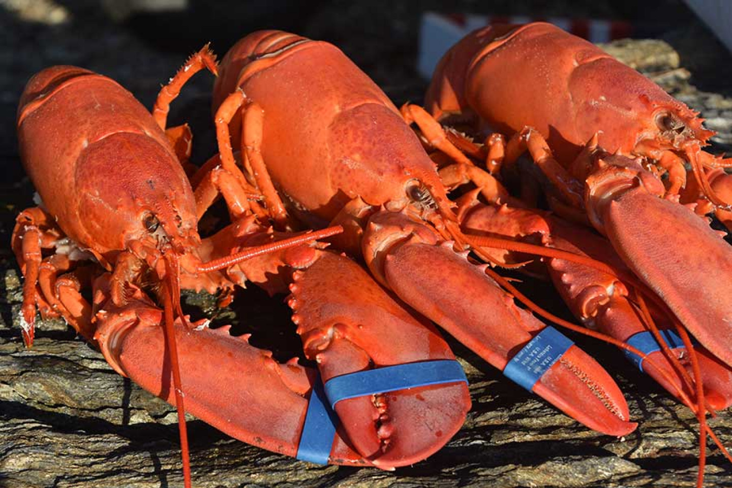 Enjoy a Lobster Dinner From Portland, ME